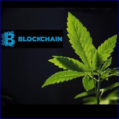 Blockchain & cannabis